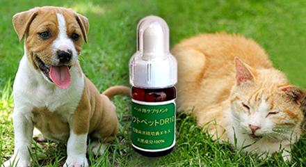 犬・猫の健康のためのサプリメント