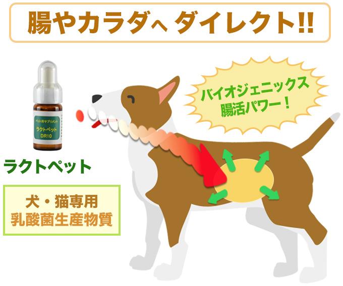 ラクトペットの特徴 - 腸や体へダイレクト バイオジェニック腸活パワー、犬・猫専用 乳酸菌生産物質
